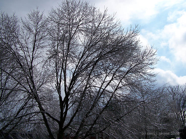 Trees Trimmed in Ice.