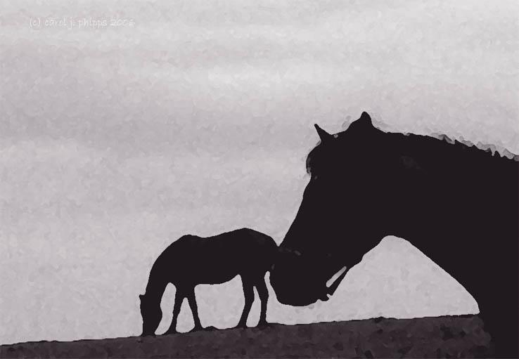 Maryland Horse Farm.