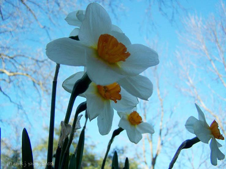 Ednas Spring Flowers.