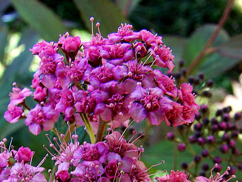 H5 Flower