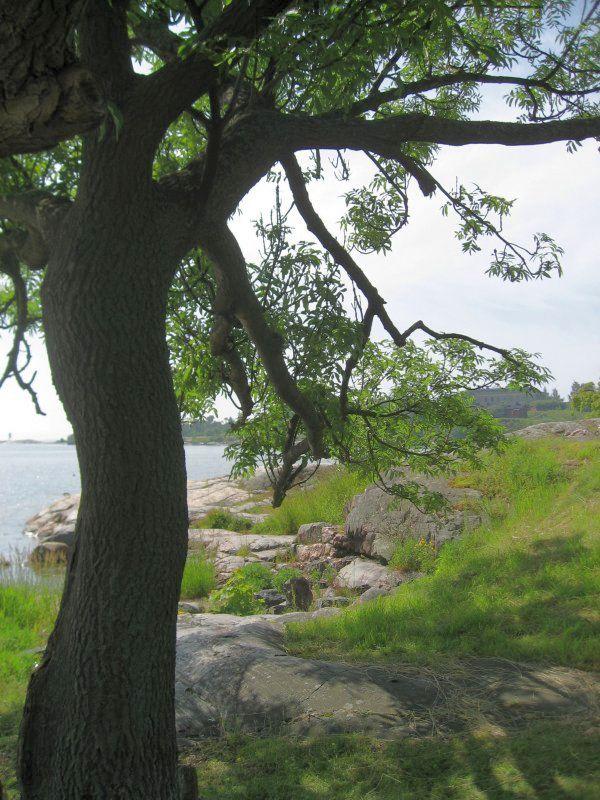 Ash Tree Onshore
