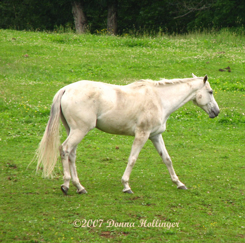 Dirty White Horse