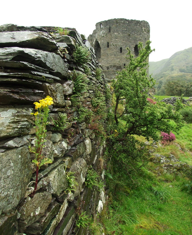 Dolbadarn Castle in heavy rain - 1