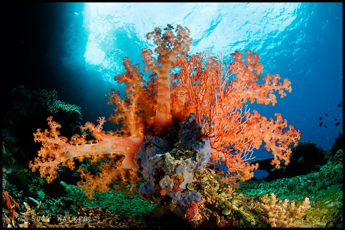 sprig of soft coral