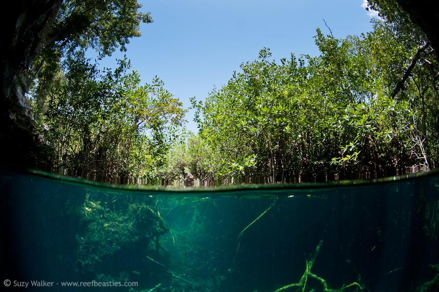 Eden Cenote split