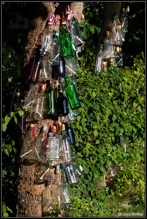 Wisdom bottle tree