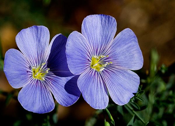 06-07 R Flowers 10.JPG