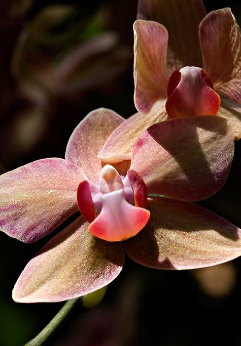 07-05 Mainau orchids 01.JPG