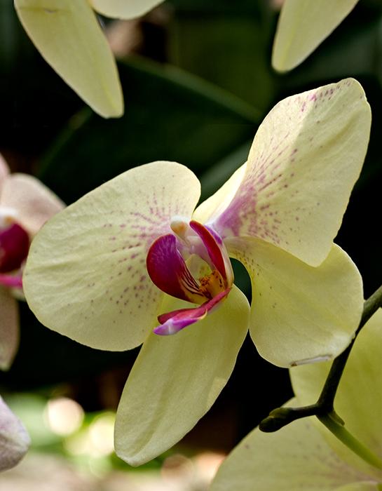 07-05 Mainau orchids 03.JPG