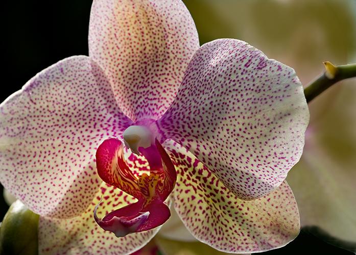07-05 Mainau orchids 05.JPG