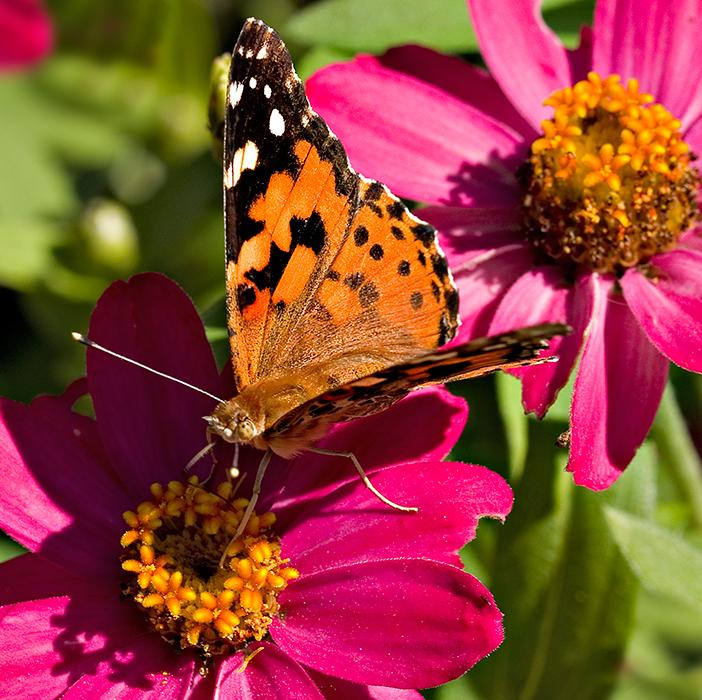 07-09 Butterfly 02.JPG