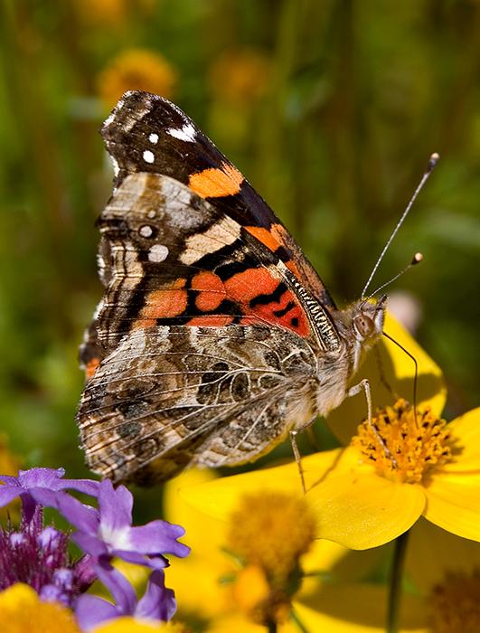 05-09 Butterfly 01.JPG