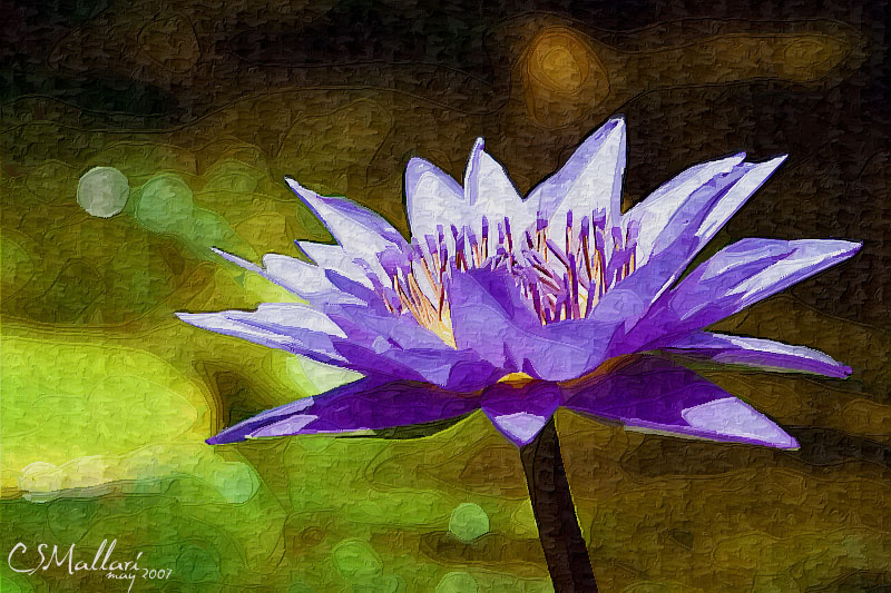 waterlily #3