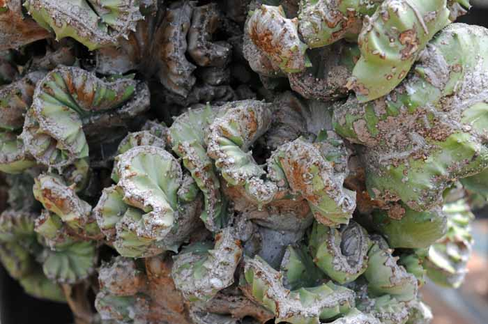cactus gymnastics