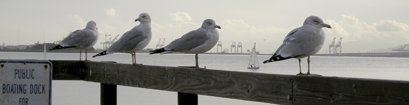 four gulls2