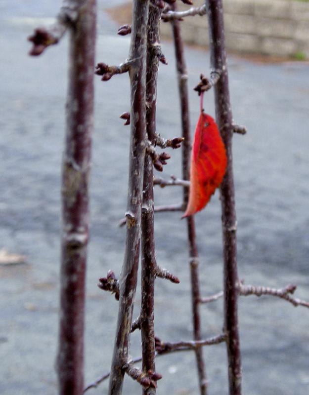 last leaf2