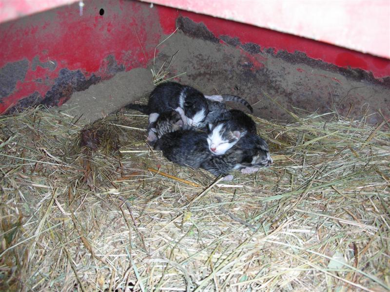 Baby Kittens Found in Barn