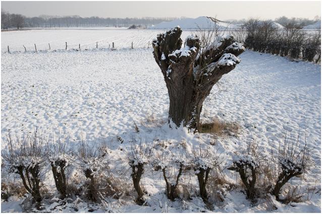 winter in de Veldschuur