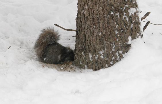 Winter in the Park - Toronto