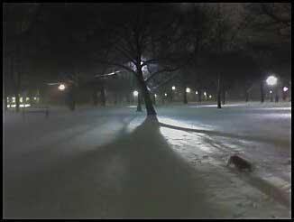 A winters night - downtown Toronto