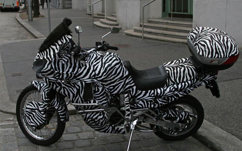 Moto Zebra,Vienna