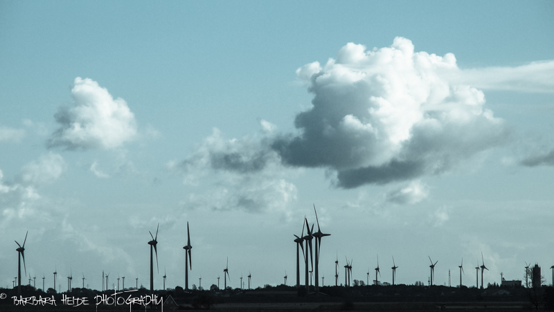 Wind-Mill Forest