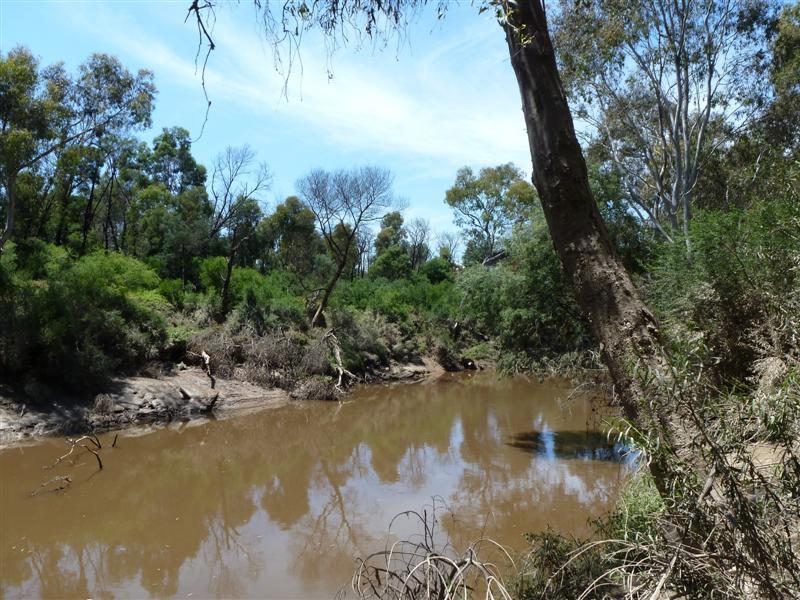 Yarra river in Birrarrung Park, Lower Templestowe