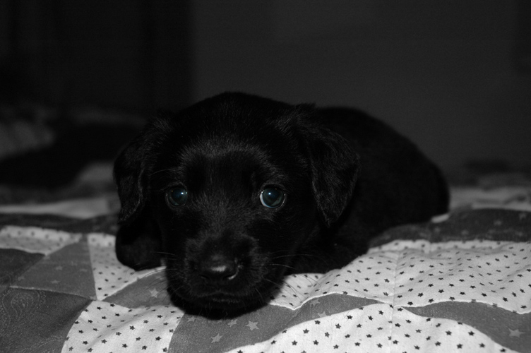 Fred at 4 weeks old