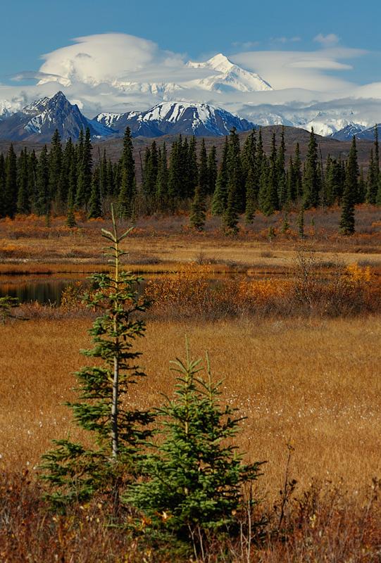 Denali across the Tundra