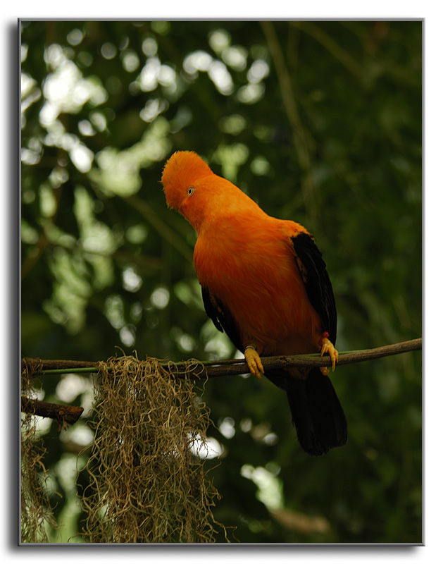 Some of the  Local Resident Color