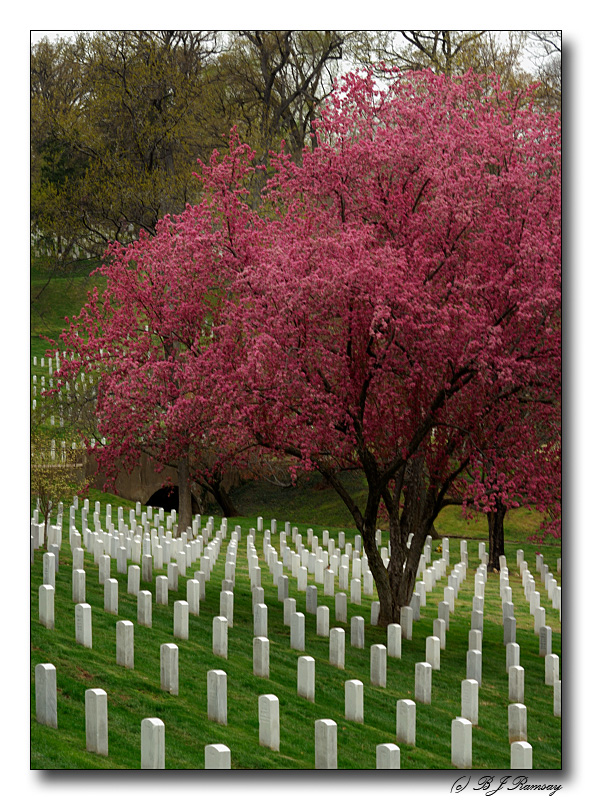 Light breaks through at Arlington Cemetery
