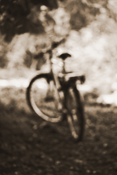 bike & tree