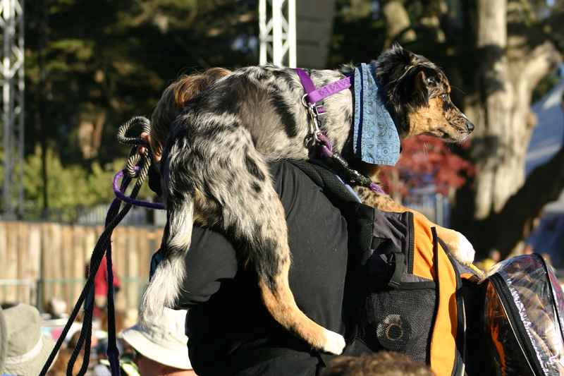 Crowd Surfing Dog