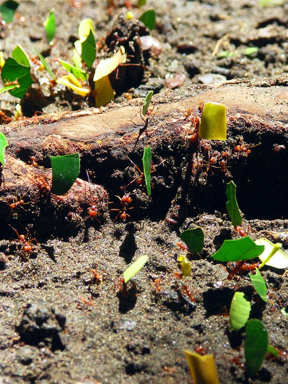 Hardworking Ants
