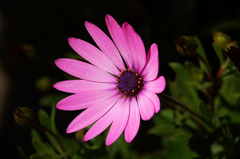 daisy 2 h.jpg