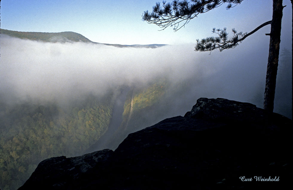 Pine Island Vista