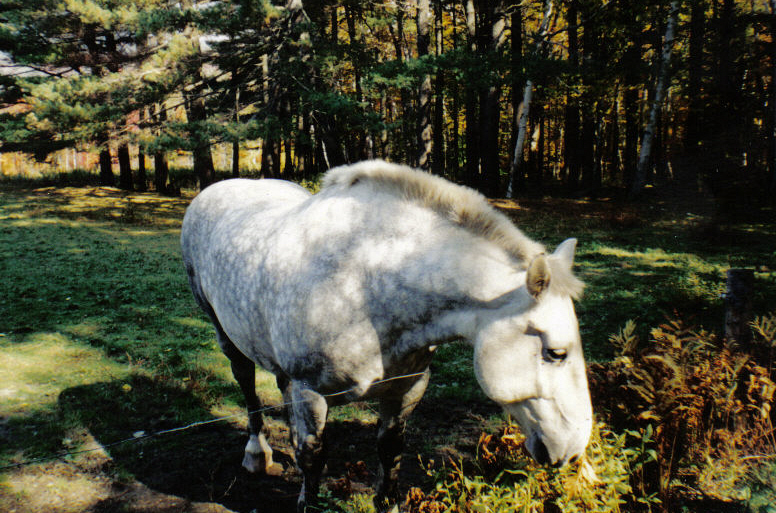 A friendly horse in New Hampshire