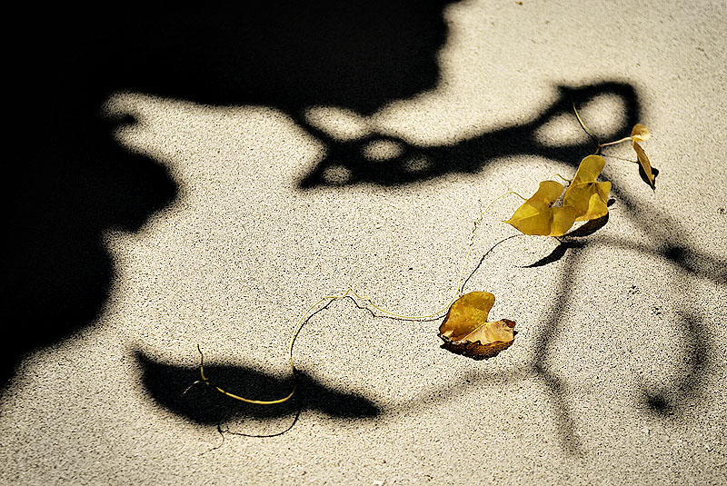 shadow and...
