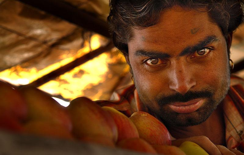 apple vendor