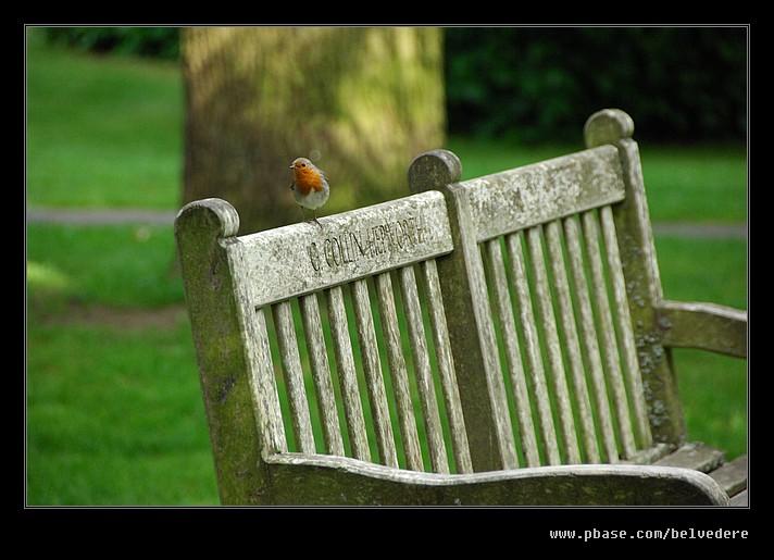 Friendly Robin, Lower Slaughter
