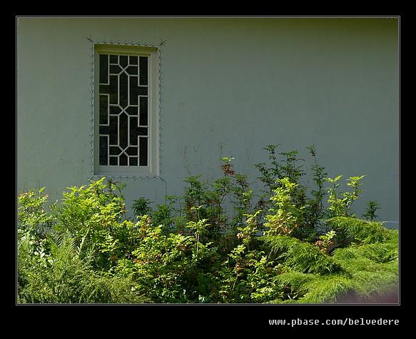 Shugborough Estate #25