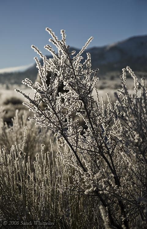 Sparkling Hoar Frost