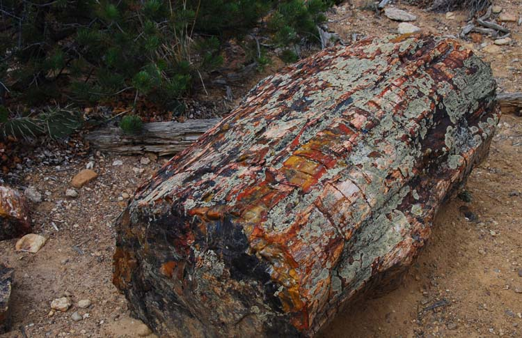 Entire Logs Everywhere Down the Mountainside