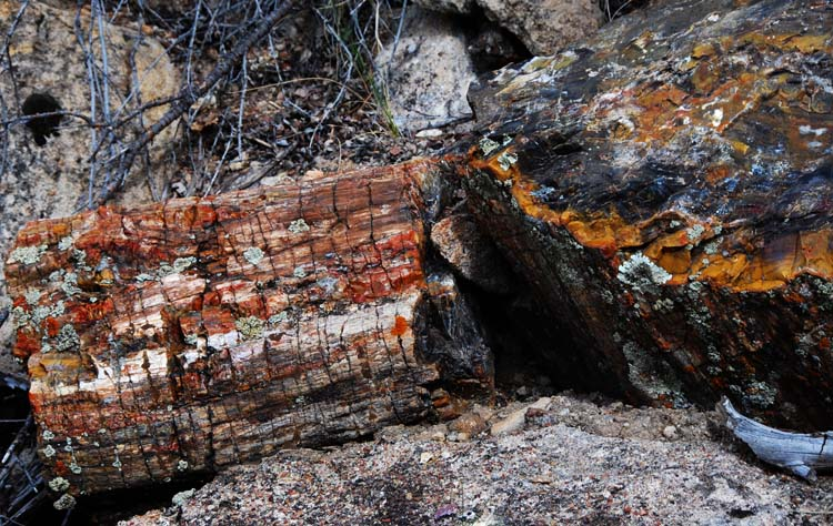 Broken Logs are Scattered All Down the Hillside - Everywhere!
