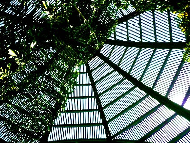 Up Shot of a Wood-Slated Arborarium