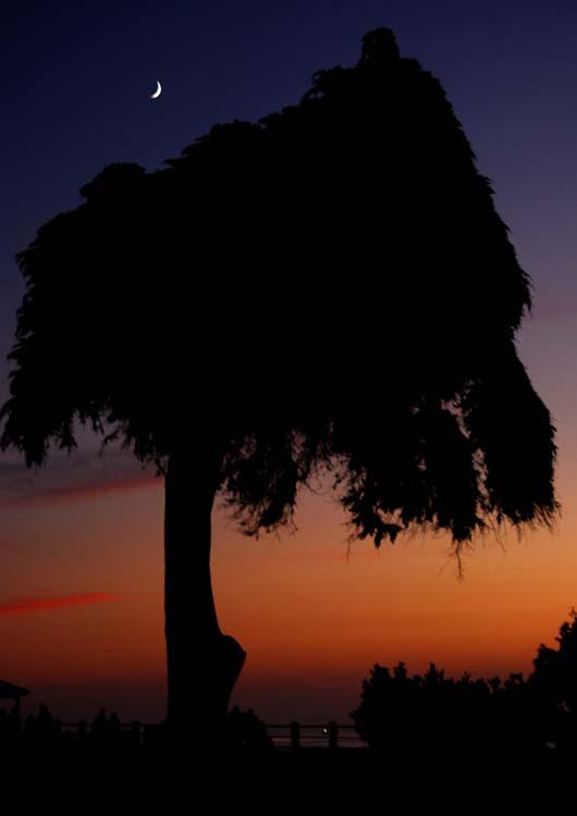La Jolla Cove Series - Windblown Friend