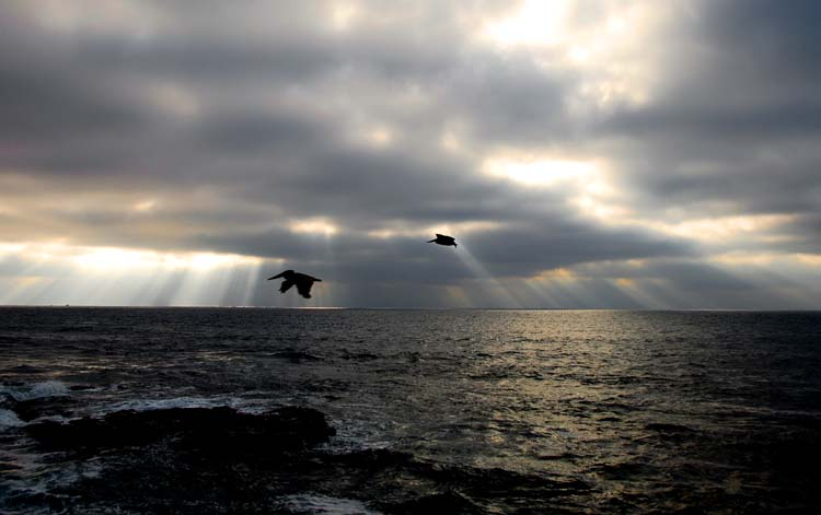 Silver Lining, with Pelicans