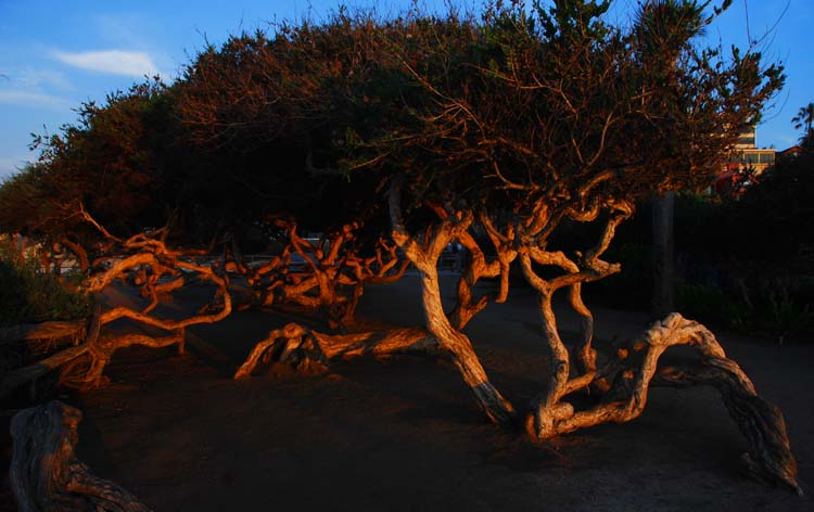 Natural Sculptural at La Jolla Cove