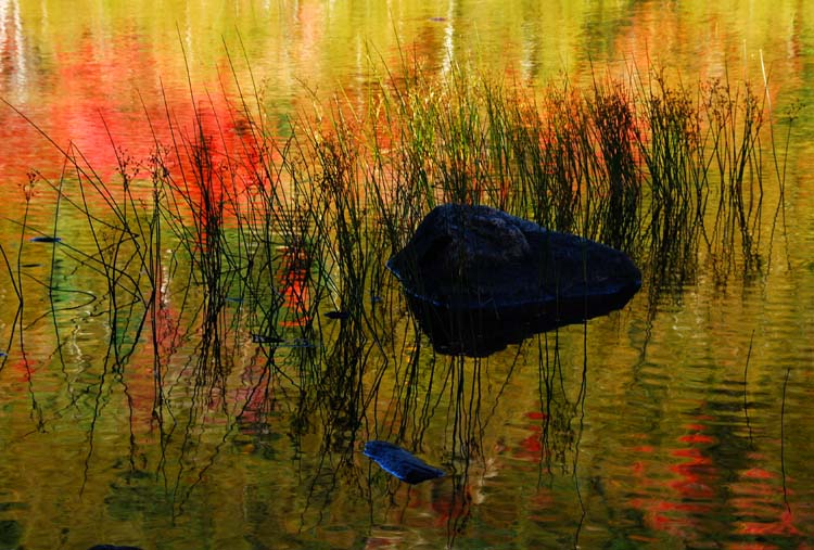 The 3 Rs: Rocks, Reeds and Reflections
