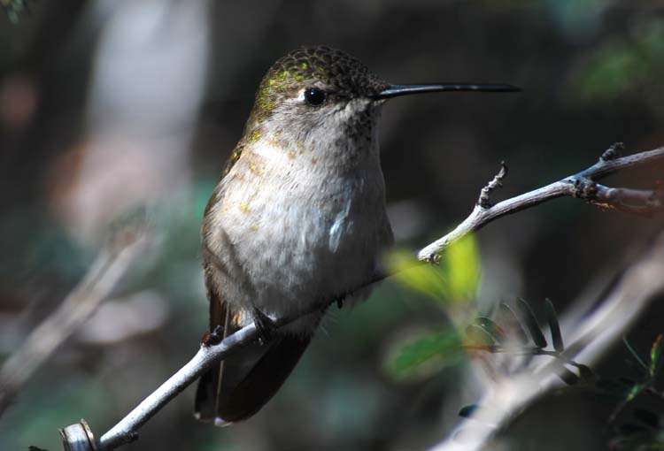How About A Few Hummingbirds!